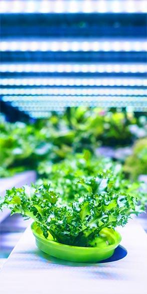 precision measurement in food industry